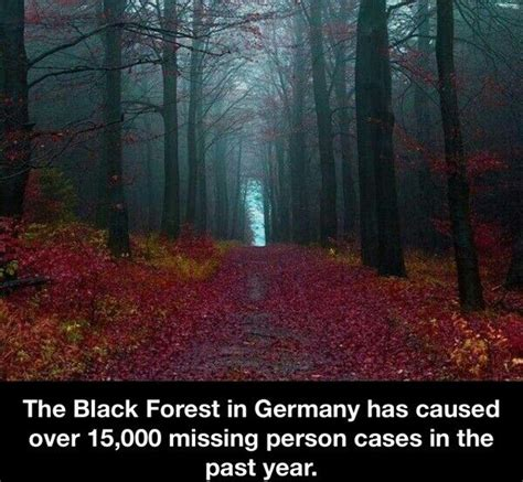 the black forest germany fact check did germany s black forest cause 15 000