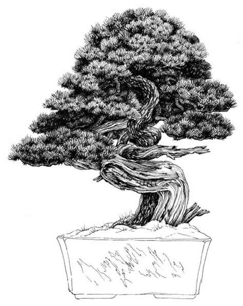 libro bonsai the art of dibujo del maestro venezolano nacho marin perteneciente a su libro 100 bonsai dibujo