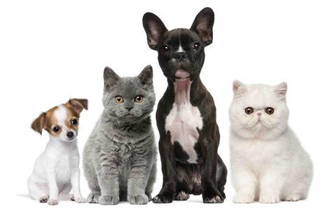 pet cat thrive pet foods
