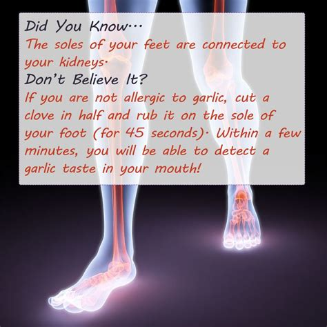Foot Detox Facts by 116 Best Reflexology Images On Acupuncture
