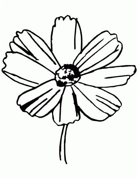 coloring pictures jasmine flowers jasmine flower coloring pages coloring home