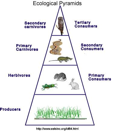 ecosystems components performance trophic levels and