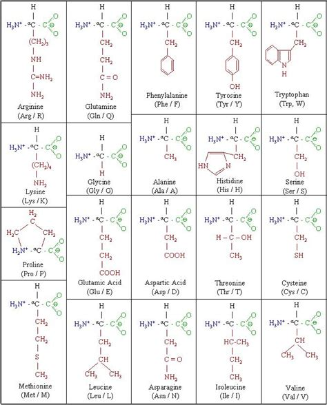 amino acid table amino acids chart www pixshark images galleries with a bite