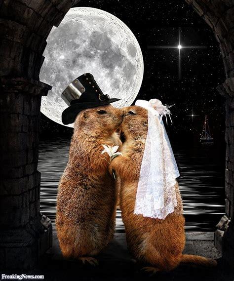 groundhog day st louis zoo moonlight 3