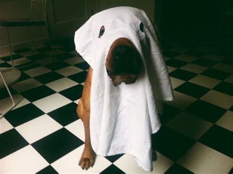 ghost puppy ghostbusters the remake we can all get