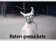 Hater Llama GIFs - Find & Share on GIPHY Jon Heder Twin