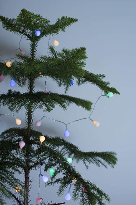 stock photo  natural pine christmas tree  simple lights freeimageslive