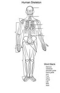 Human Skeleton Worksheet coloring page | Free Printable