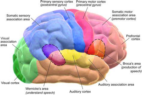 turkaljunk az agyakban  mar tudjuk miert pengebbek