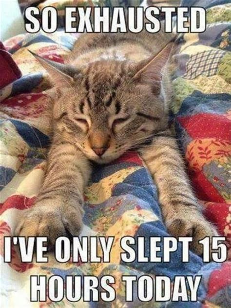 Sleepy Cat Meme - sleepy cat memes image memes at relatably com