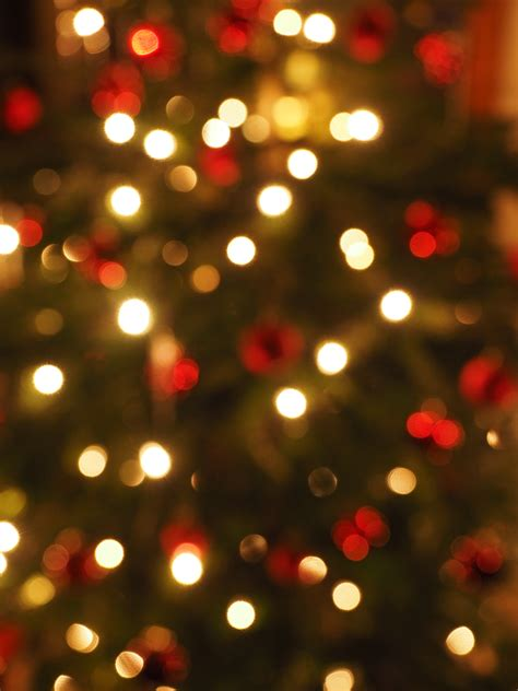 free images bokeh petal red holiday christmas tree