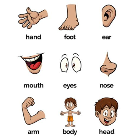 printable body part flashcards for toddlers flashcards body parts finding finn