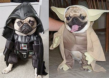 darth vader pug costume pugs in costumes because you you want to see it