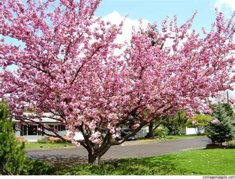 fiori giapponesi significato fiore giapponese significato fiori fiore giapponese