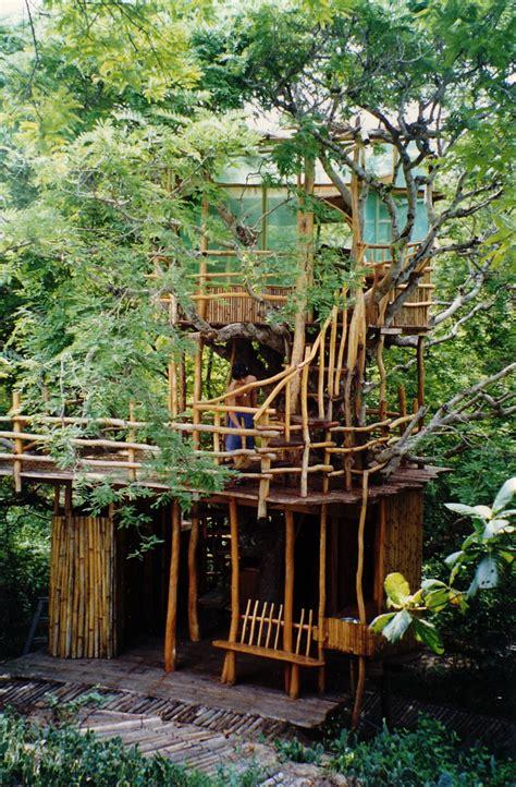 tree house nanshan treehouses