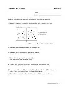 17 best images of osmosis worksheet answers osmosis and