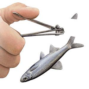 crappie fishing quiz test  crappie fishing iq
