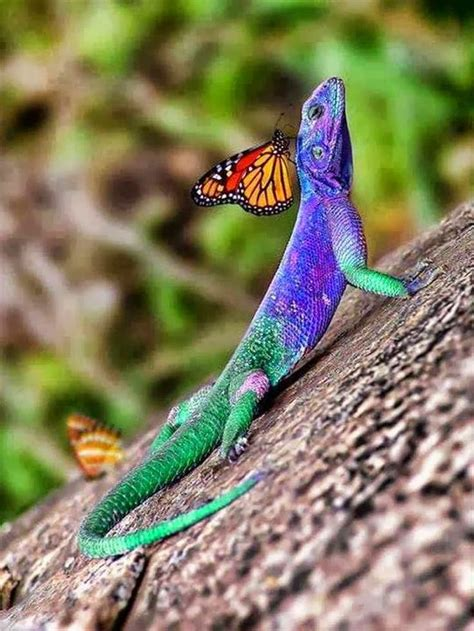 colorful animals best 25 colorful animals ideas on