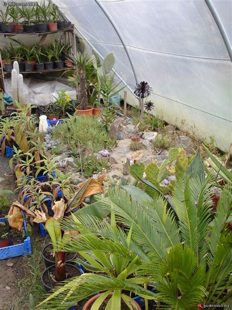 serre froide serre froide mon jardin 04 2010 les galeries photo de