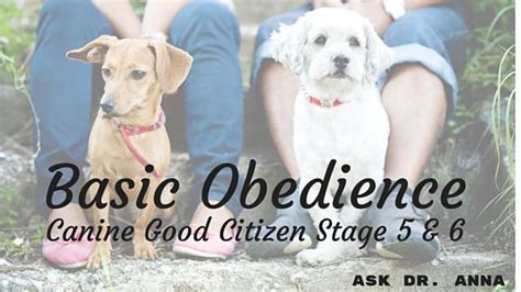 basic obedience basic obedience canine citizen stage 5 6 ask dr guthrie pet