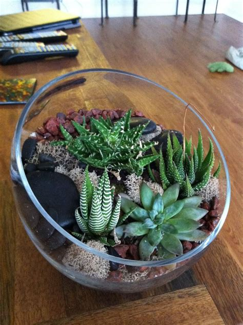 cactus terrarium  artwork pinterest diy  crafts