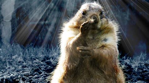 groundhog day in groundhog day has roots in astronomy astronomy