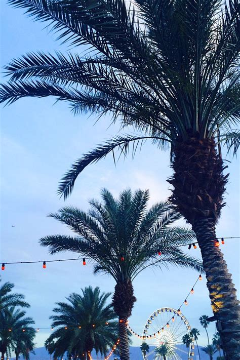 summer vibes palm trees hd 269 best h m loves music images on pinterest