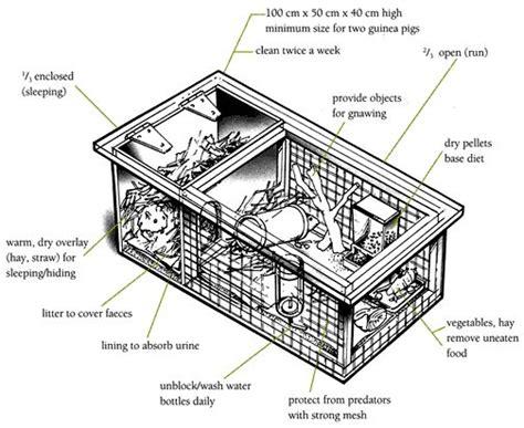 guinea pig diagram hutch diagram guinea pigs animal care caring for
