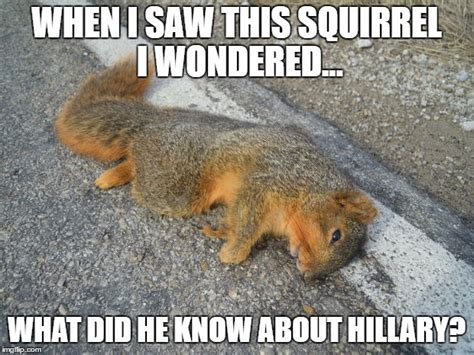 Dead Squirrel Meme - roadkill imgflip