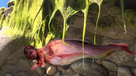 Imagenes Y Videos Reales De Sirenas | sirenas reales encontradas vivas las fotos m 225 s