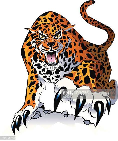 jaguar clipart jaguar stock illustrations and getty images