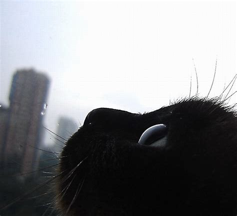 my pugs skin is turning black look at the big city four legged friends cats cas and cats