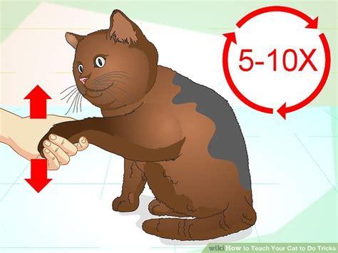 how to my to do tricks how to teach a cat tricks cats