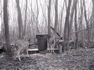 How To Build A Deer Blind Cheap Homemade Feeders And Feeding Deer Birds Animals