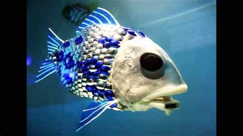 imagenes raras de animales animales marinos extra 241 os y maravillosos hd youtube