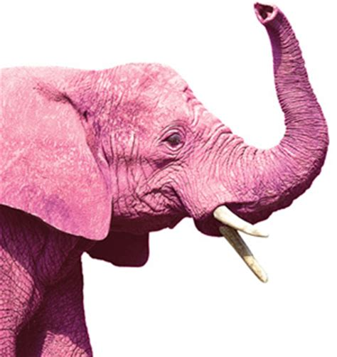 the pink elephant in the room the pink elephant in the room lgbt altweeklies