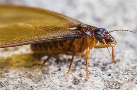 escrow termite inspection corkys pest control san
