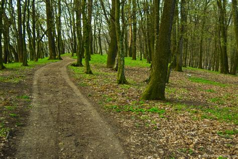 The Woods woods path