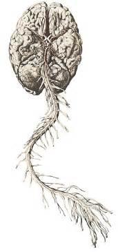 Brain And Spine Brain And Spine Anatomy Brain Brain And Spine