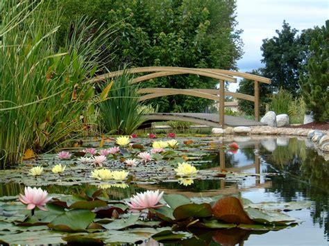 imagenes de jardines acuaticos plantes de bassin z 233 nitude et f 233 233 rie au jardin