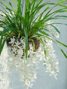 best inside plants 25 best indoor plants gardening pinterest