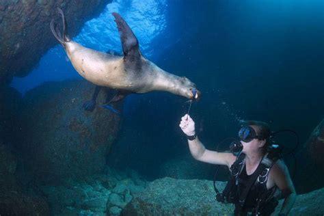 dive galapagos scuba diving in galapagos islands ecuador dive the