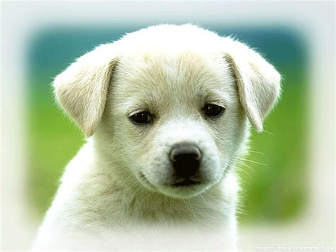 dogs food stuff cute puppy wallpapers the reason puppies facial expressions are forlorn