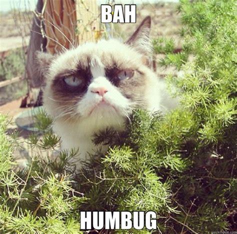 Bah Humbug Meme - bah humbug funny cat quickmeme