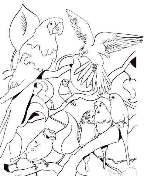 imagenes de animales y plantas para colorear animales para colorear pajaros dibujos infantiles para