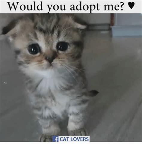 Cat Lover Meme - 25 best memes about cat lover cat lover memes