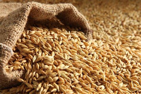 opportunities in barley malt industry financial tribune