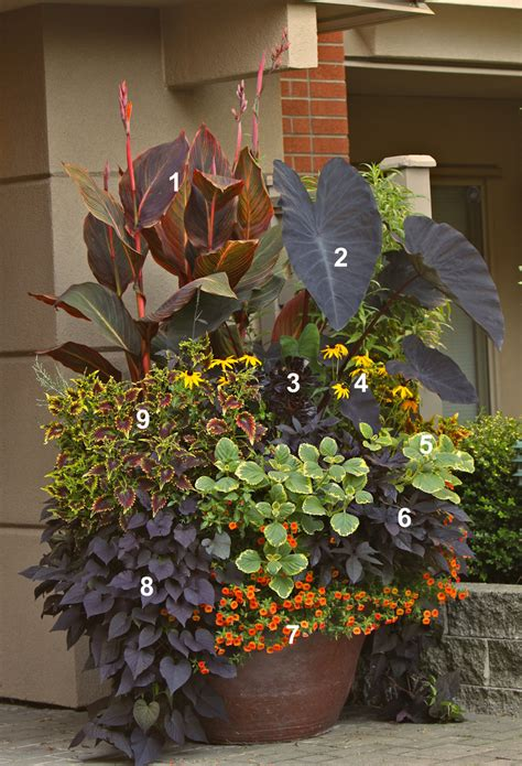Planter Gardening by Overwhelmed By Mixed Containers Try These 10 Tips From