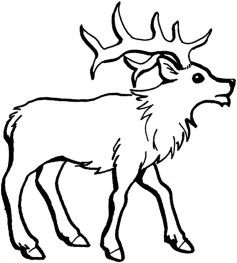 caribou color caribou coloring pages coloringbay