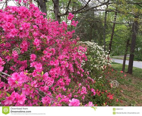 colors of spring the colors of spring stock image cartoondealer com 5483299